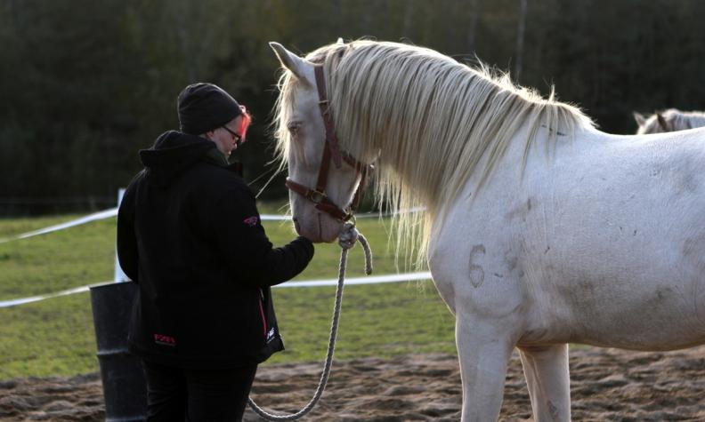 Hevosavusteisen työn perustana turvallisuuden tunne