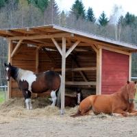 Hyvä koti hevoselle?